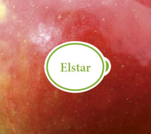 Elstar Packshot closeup