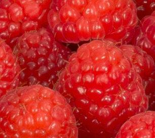 framboos_closeup