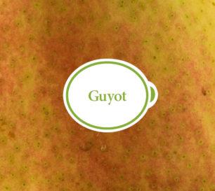 guyot_closeup