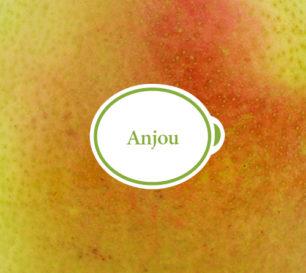 Anjou_Closeup